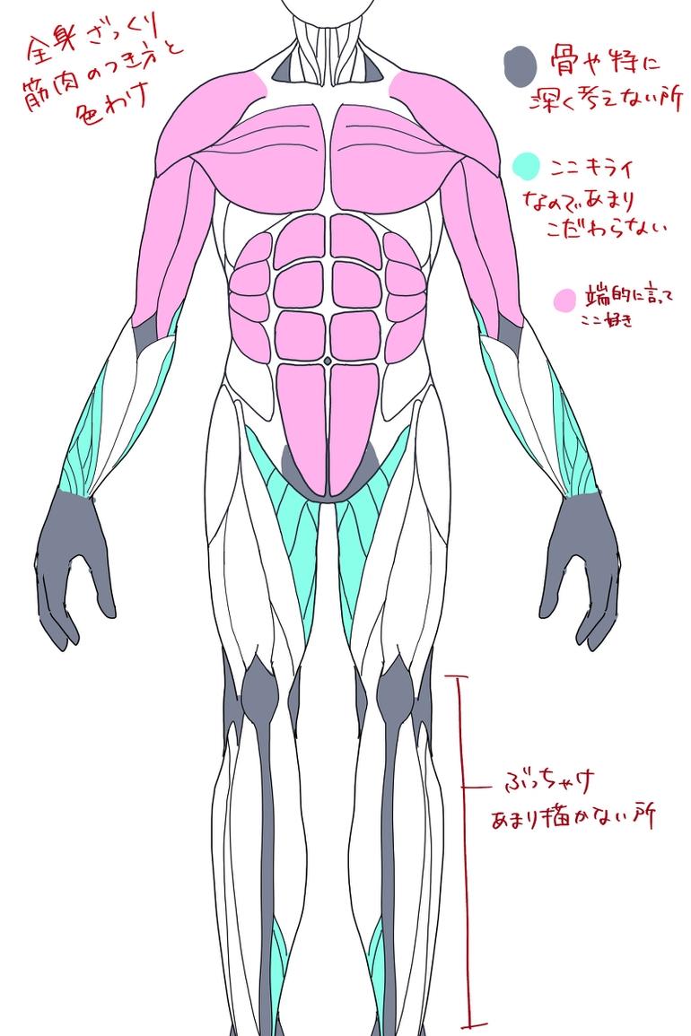 人体的肌肉怎么画?本文就教你画人体的肌肉!