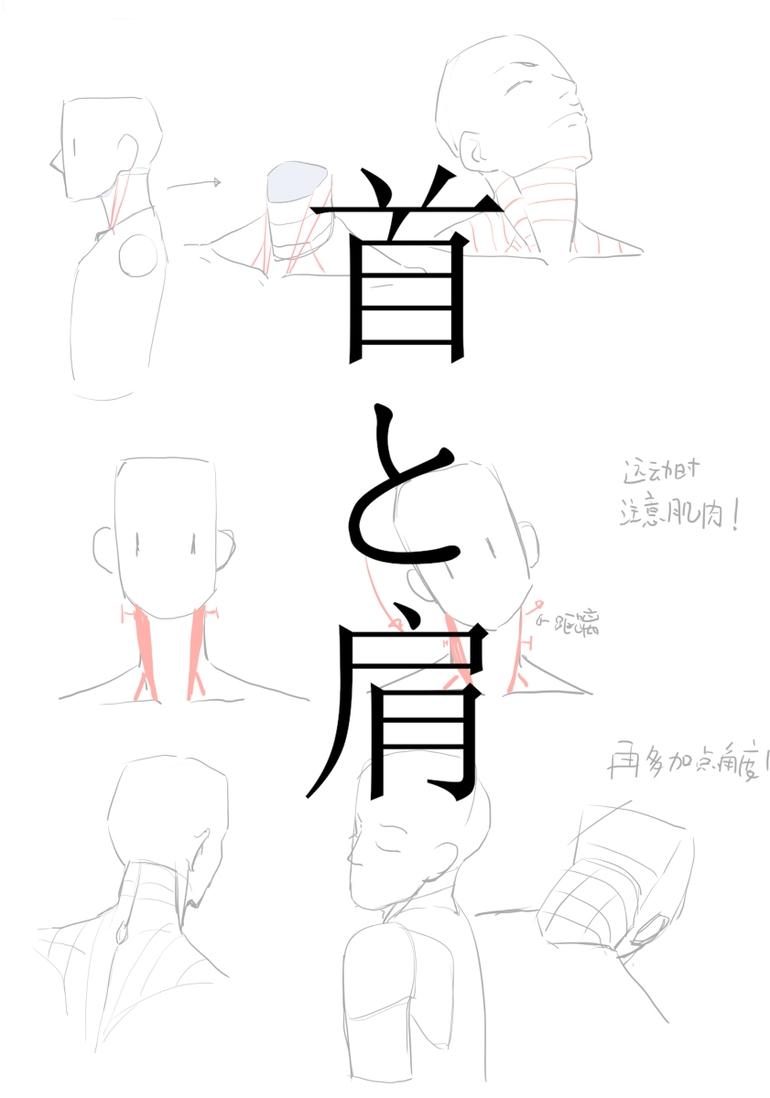 一直画不好肩膀和脖子?看完这篇文章你就会画肩膀和脖子了!