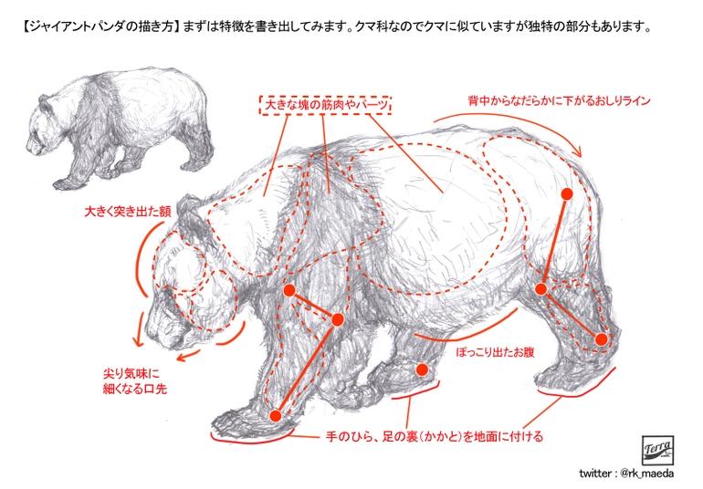 怎么画一只可爱的大熊猫?