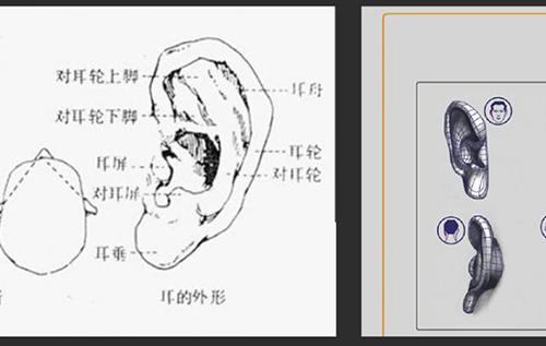 动漫人物耳朵的结构和阴影画法