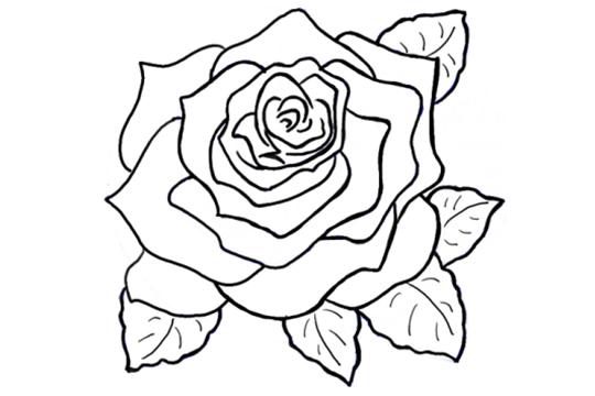 玫瑰花绘画技巧,教你画超简单玫瑰花